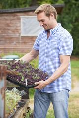 Farmer Planting Seedlings On Organic Farm