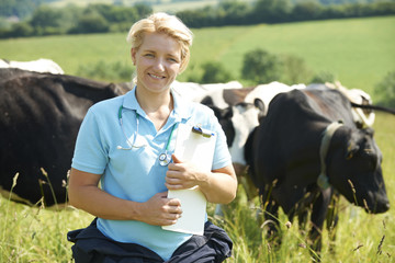 Female Vet In Field With Cattle