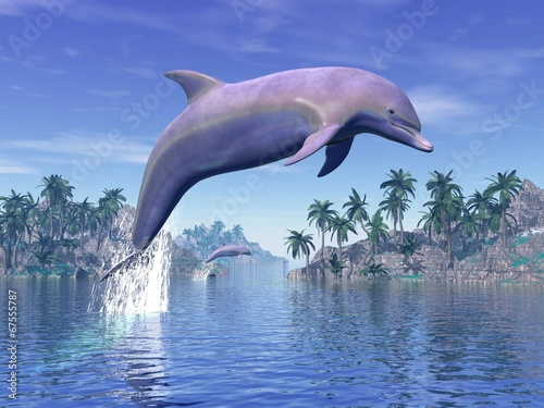 Dolphin in the tropics - 3D rneder