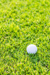 canvas print picture - Golf ball on green grass