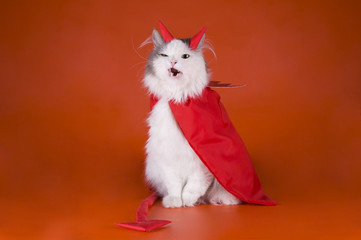 Cat in a devil costume