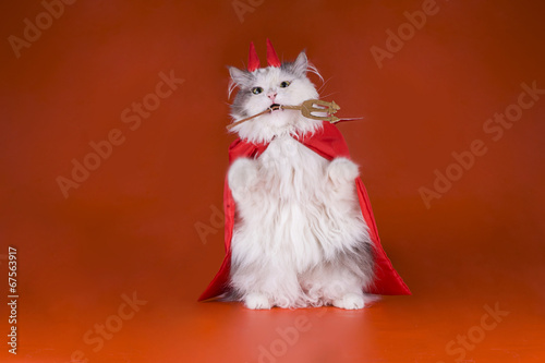 canvas print picture Cat in a devil costume