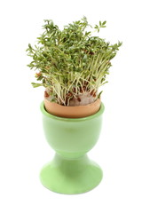 Fresh green watercress in green cup. White background