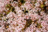 Glade of pink flowers