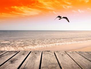 gaviota volando en la playa del cielo dorado