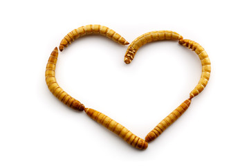 Love mealworms