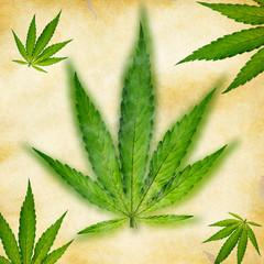 Cannabis leaf, marijuana plant.