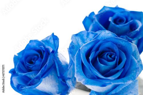 Fotobehang Rozen 青いバラ バラ 青色 ブルー