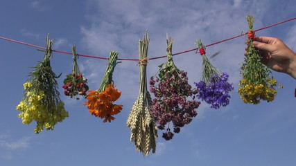 various medical herbs bunches on  string