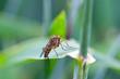 canvas print picture - Fliege auf einem Blatt
