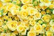 黄色いバラ バラ 薔薇 黄色 イエロー - 67571368
