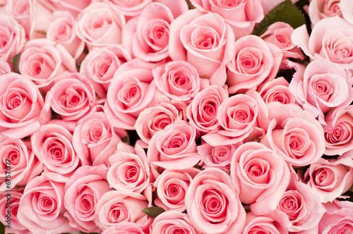 ピンクのバラ バラ 薔薇 ピンク ピンク色 - 67571377