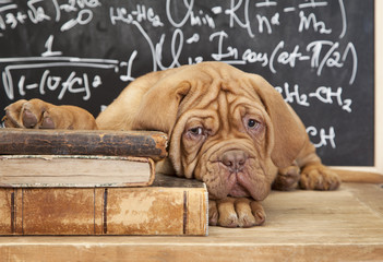 Pile of Books and puppy