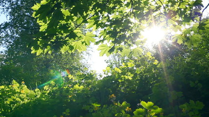 Sun breaking through green leaves.