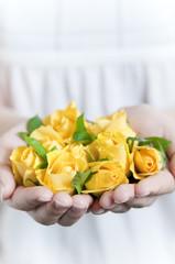 掌の上のバラ 手のひら バラ 黄色いバラ