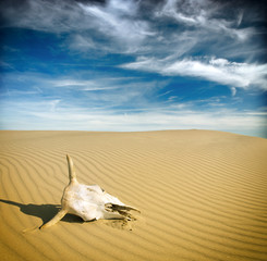 Desert skull, Africa