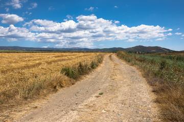 Sardegna, strada di campagna