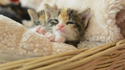 cute young kittens at home