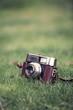 film camera on grass