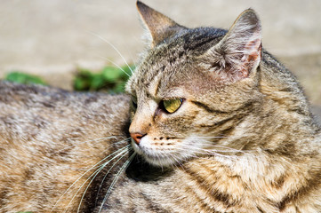 Portrait of cat looking away