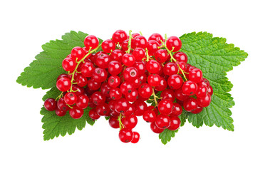 Red currants and green leaves