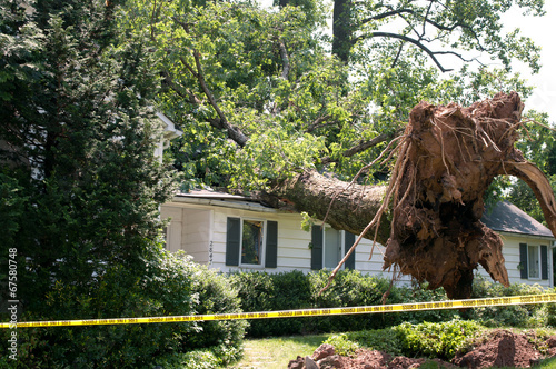 Foto Spatwand Bomen Uprooted tree