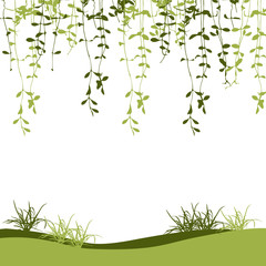 Green climber leaf and grass vector for spring background