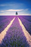 Fototapety Lavender spirit