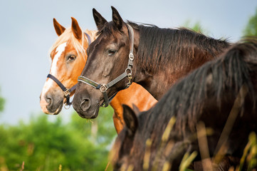 Portrait of two horses in the herd