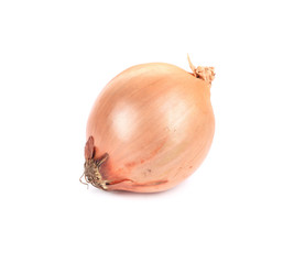 Ordinary onion.