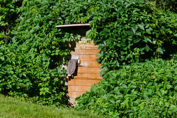 wooden cellar door with overgrown creepers village