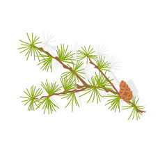 Larch tamarack branch vector illustration