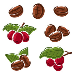 Coffee beans set. Vector