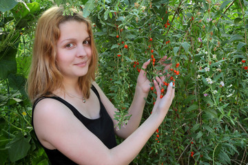 Agriculture, woman hold goji berry fruit in hands, healthy food