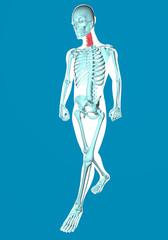 Uomo che cammina visto ai raggi x con dolore alla cervicale