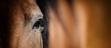 """Постер, картина, фотообои """"Eye of Arabian bay horse"""""""