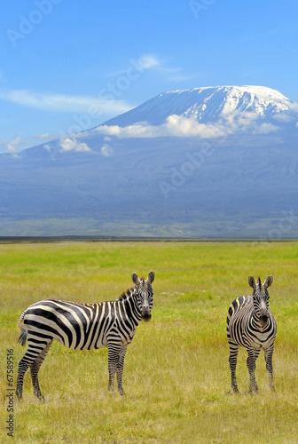 Fotobehang Zebra Zebra