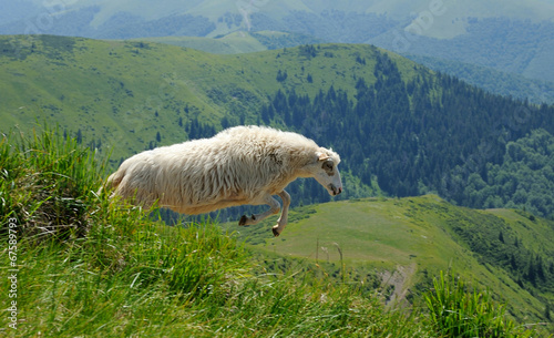Deurstickers Schapen Sheep in mountain