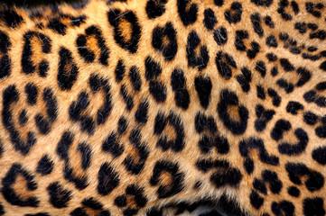 Real Leopard Skin
