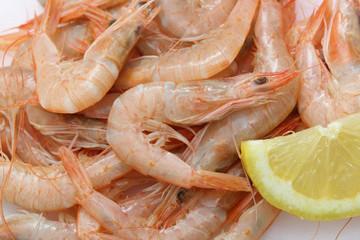 Vey fresh prawns (light pink natural color) from atlantic ocean