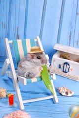 funny hamster relaxing on summer holidays