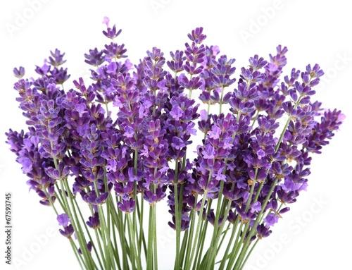 Foto op Canvas Lilac Lavender