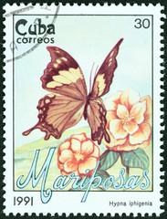 Hypna iphigenia butterfly (Cuba 1991)