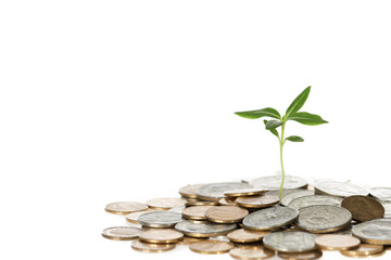 Small Growing Tree Out Of Coins On White Background