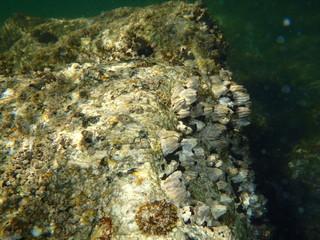 Fondo submarino en el Parque Nacional de la Isla de Ons
