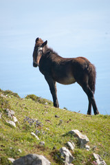 Black horse in the mountain with the sky behind