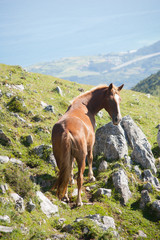 Horse free in the mountains