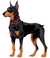 Doberman guard dog