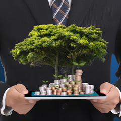Businessman money growing with big tree concept