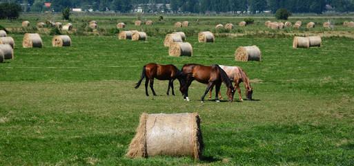 Feld und Pferde - Landwirtschaft